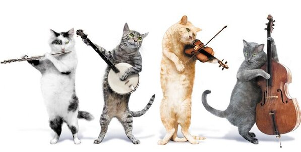 Группа Jingle Cats